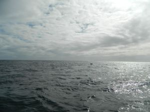 our first glimpse of a whale - the magic was about to begin!