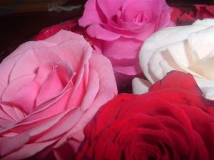 The shot which got me 'hooked' into photography - Mini-roses on my dining room table...
